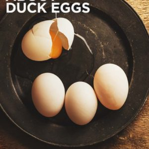 All You Need to Know About Duck Eggs