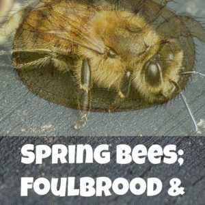 Foul Brood and Mite Control