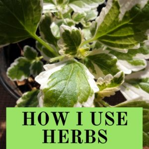 How I use herbs – Mother of herbs