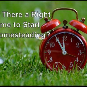 When Is The Right Time To Homestead?