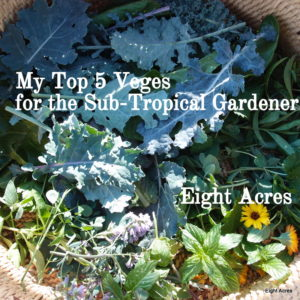 Top 5 Veggies for the sub-tropical gardener