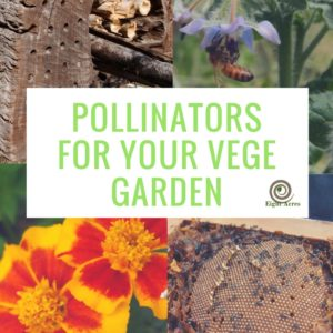 Pollinators for the vegetable garden
