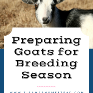 Getting Goats Ready for Breeding Season