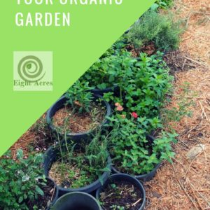 Using mulch in your organic garden