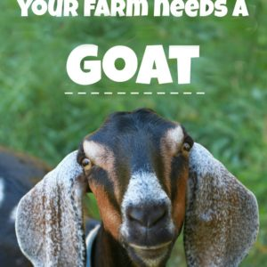 6 Reasons Your Farm Needs a Goat