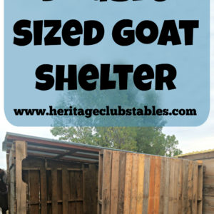Double Sized Pallet Goat Shelter