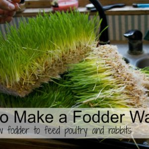 What Is Fodder And How Do I Start It?