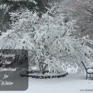 Preparing your homestead for Winter