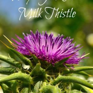 Why You Need Milk Thistle
