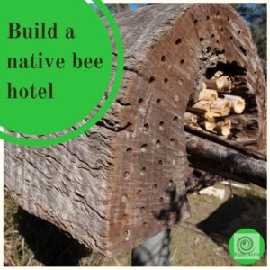 Build a native bee hotel