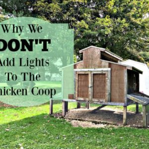 What Are The Risks When You Add Lights To Your Coop?
