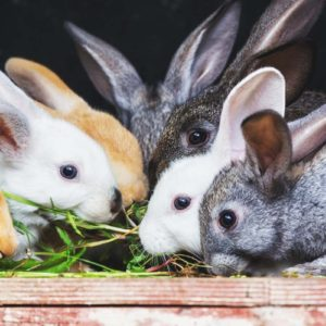 10 Tips to Care for Your Backyard Meat Rabbits