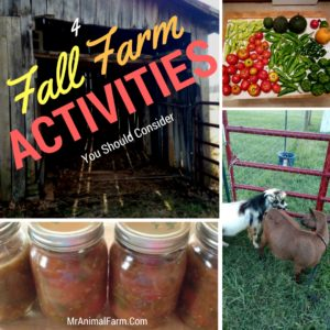4 Farm Activities for the Fall