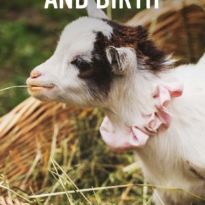 All You Need to Know About Goat Pregnancy and Birth