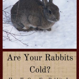 Are Your Rabbits Cold?  How To Care For Rabbits In Winter
