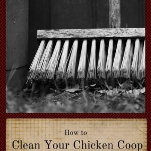 How To Clean Your Chicken Coop The Right Way