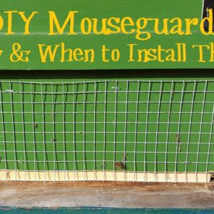 DIY Mouse-Guards: How & When to Install them on your Beehive