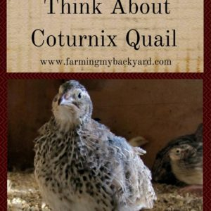 Here's Why You Should Absolutely Think About Coturnix Quail