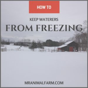 How to Prevent Animal Waterers from Freezing