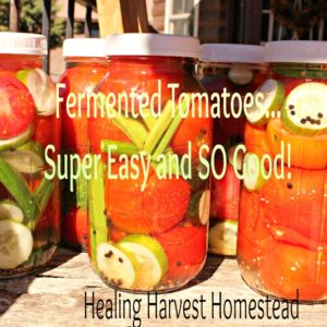 How to Make Fermented Tomatoes….Traditional USSR Recipe!
