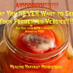 What You NEVER Want to See on Your Fermented Veggies!