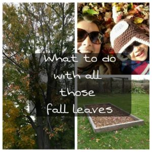 All Those Fall Leaves & What to Do With Them
