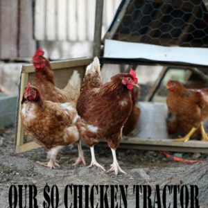 Our $0 Chicken Tractor