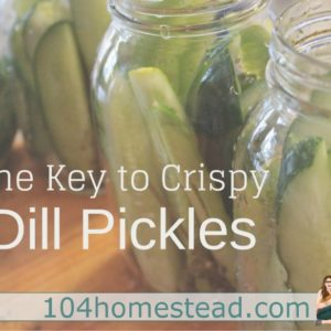 The Key to Crispy Dill Pickles {the secret's in the leaf}