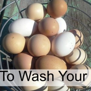 How To Wash Eggs Like A Boss