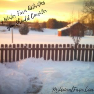 Winter Farm Activities to Try on Your Farm or Homestead
