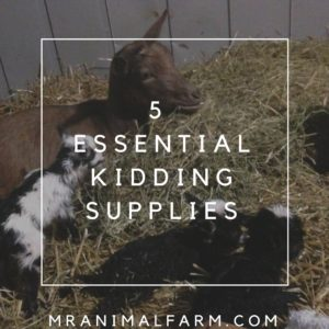 Kidding Supplies You Should Have for Your Goats