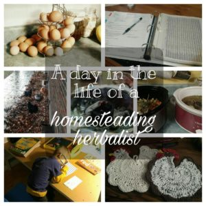 A Day in the Life of a Homesteading Herbalist