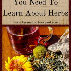 5 Reasons You Need To Learn About Herbs