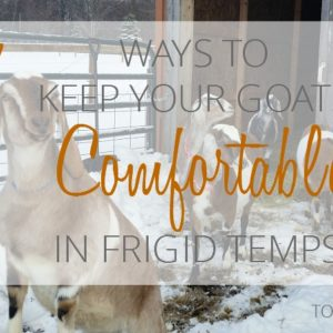 7 Ways to Keep your Goats Comfortable in Frigid Temperatures