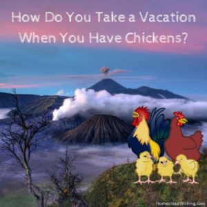 How Do You Take a Vacation When You Have Chickens?