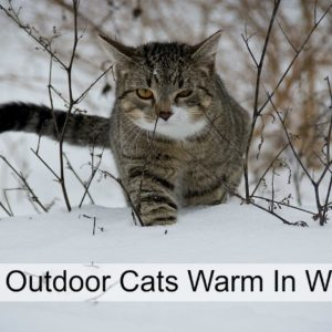 Keeping Cats Warm In Winter
