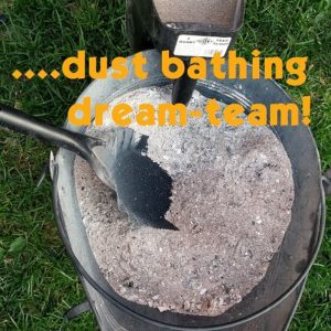 Wood ash & DE, a dust bathing dream team