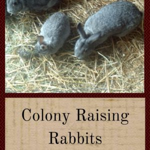 Colony Raising Rabbits: How To Get Started