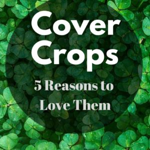 5 Reasons I Love Cover Crops