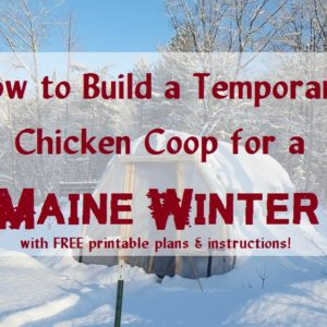 How to Build a Temporary Chicken Coop for a Maine Winter; with FREE printable instructions
