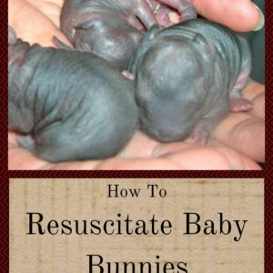 How To Resuscitate Baby Bunnies (Even If They Look Dead)