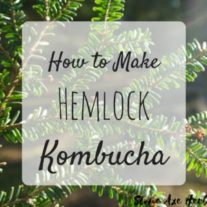 How to Make Hemlock Kombucha
