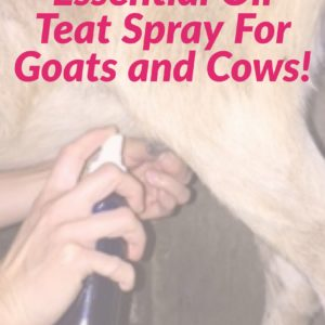 Make Your Own Essential Oil Teat Spray For Goats and Cows!