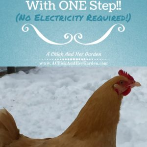 Keep Your Chickens Water From Freezing, With One Simple Step!