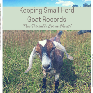 Keeping Records for a Small Goat Herd
