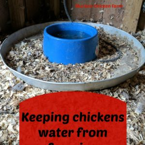 Keeping your chickens water from freezing