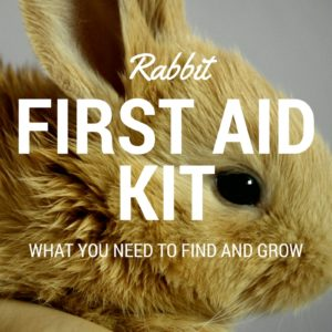 A first aid kit for your rabbits