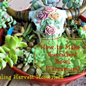 How to Create a Beautiful Succulent Bowl