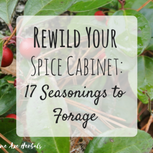 Rewild Your Spice Cabinet: 17 Seasonings to Forage For