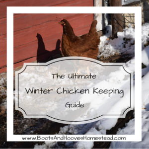 Winter Chicken Keeping Guide
